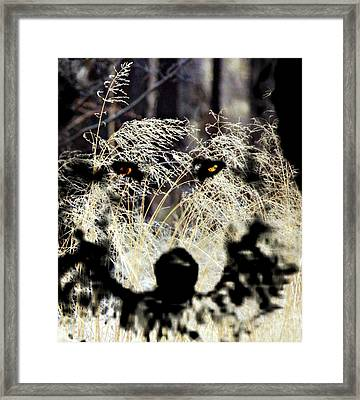 Wolf Night In Tall Grass Framed Print by Barbara Chichester