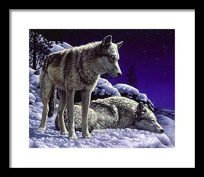 Gray Wolves Framed Prints
