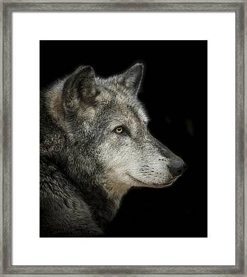 Wolf Framed Print by Paul Neville