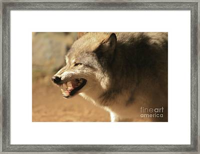 Wolf Power Framed Print