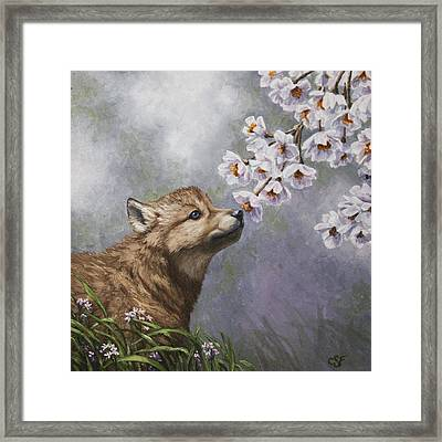 Wolf Pup - Baby Blossoms Framed Print by Crista Forest