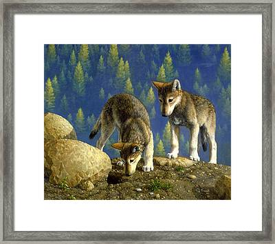 Wolf Pups - Anybody Home Framed Print by Crista Forest