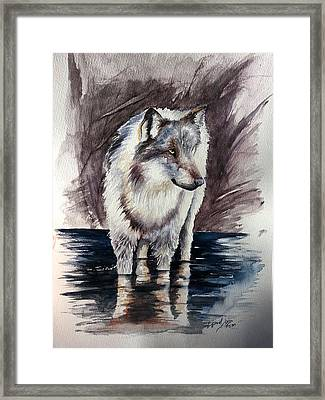 Wolf Reflektions Framed Print by Andrea Pischel