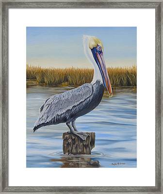 Wolf River Pelican Framed Print by Phyllis Beiser
