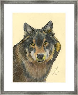Wolf Framed Print by Ruth Seal