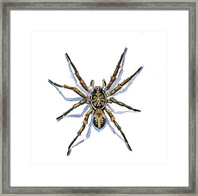 Framed Print featuring the painting Wolf Spider by Katherine Miller