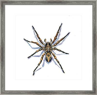 Wolf Spider Framed Print by Katherine Miller