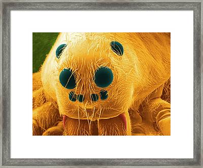 Wolf Spider's Head Framed Print by Thierry Berrod, Mona Lisa Production