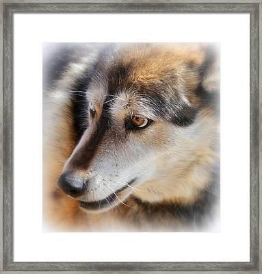 Wolf Spirit Framed Print