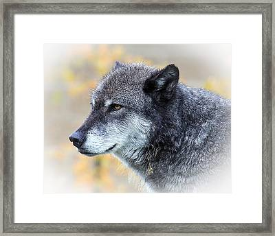 Framed Print featuring the photograph Wolf by Steve McKinzie