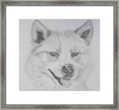 Wolf The Husky Framed Print