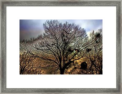 Wolf Treescape Framed Print by Barbara Chichester