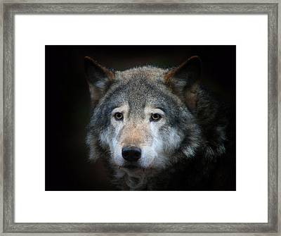 Wolf Framed Print by Vladimir Meshkov