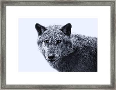 wolfman II Framed Print by Joachim G Pinkawa