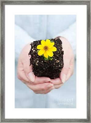 Woman Holding Flower Framed Print