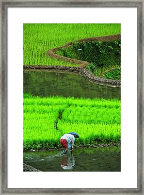 Woman Working On The Unesco World Framed Print by Michael Runkel
