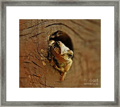 Framed Print featuring the photograph Wonder Frog by Nick  Boren