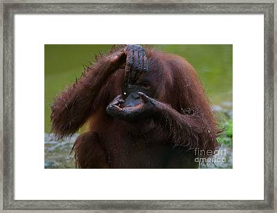 Wonder Of Water. Framed Print