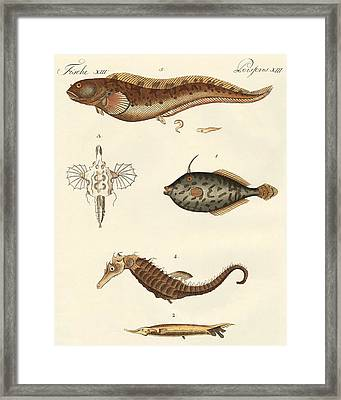 Wonderful Fish Framed Print