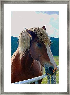 Wonderful Horse Framed Print