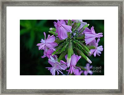 Framed Print featuring the photograph Wonderful Morning Flower by John S
