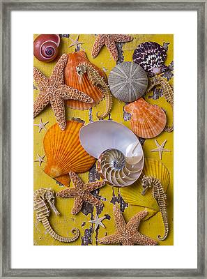 Wonderful Sea Life Framed Print by Garry Gay