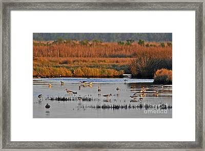 Wonderful Wetlands Framed Print by Al Powell Photography USA
