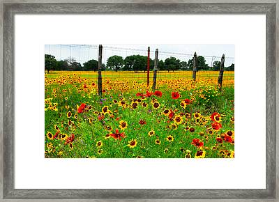Wonderful Wildflowers Framed Print