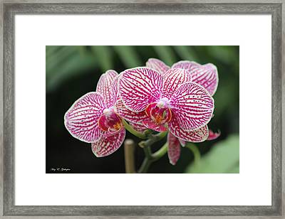 Wondering Beauties  Framed Print