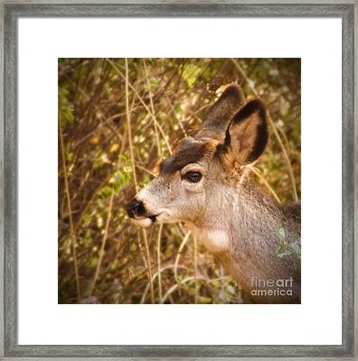 Wondering Deer Framed Print by Kimberly Maiden