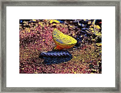 Wonderland Worm Framed Print by Al Powell Photography USA