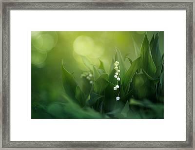 Wonders Of Spring Forest Framed Print by Magda  Bognar