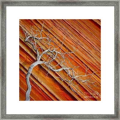 Wood And Stone Framed Print by Inge Johnsson