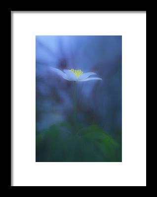 Stalk Framed Prints