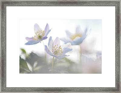Wood Anemone Flowers Netherlands Framed Print by Heike Odermatt