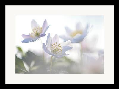 Thimbleweed Framed Prints