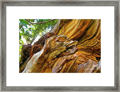 Wood Creature Framed Print by John Malone