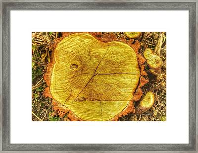 Wood Framed Print by Daniel Precht