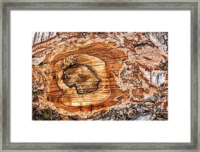 Wood Detail Framed Print by Matthias Hauser