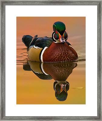 Wood Duck #6 Framed Print