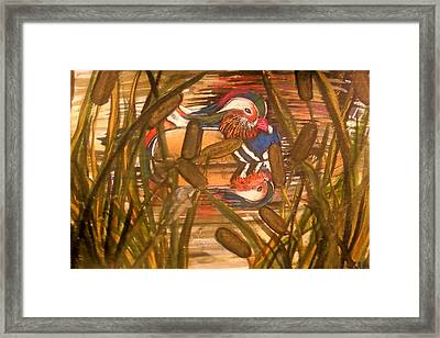 Wood Duck At Peace Framed Print by Alexandria Weaselwise Busen