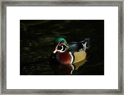 Wood Duck Drip Framed Print by Steve McKinzie