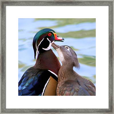 Wood Duck Love Framed Print by Bob and Jan Shriner