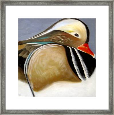 Wood Duck  Framed Print by Nicoletta Filarski