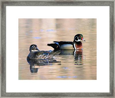 Wood Duck Pair In Kettles Framed Print