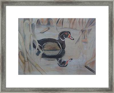 Wood Duck Framed Print by Peggy Clark