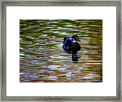 Framed Print featuring the photograph Wood Duck Reflections by John F Tsumas