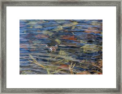 Wood Frog Framed Print by Bill Wakeley