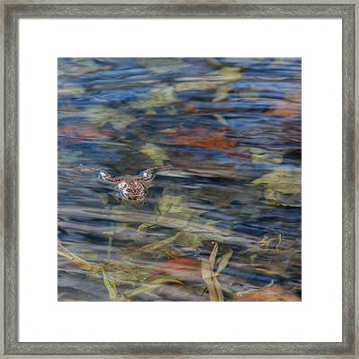 Wood Frog Square Framed Print