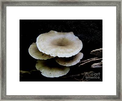 Wood Funnels Framed Print